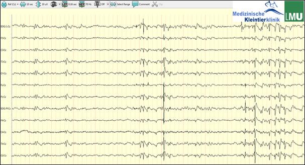 Epilepsietypische Potentiale im Elektroenzephalogramm eines Hundes mit Juveniler Myoklonischer Epilepsie.